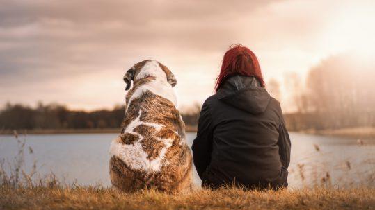 omgangsregeling-hond